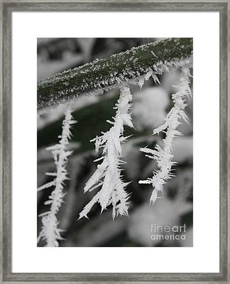 Jack Frost Was Here Framed Print by Carol Groenen