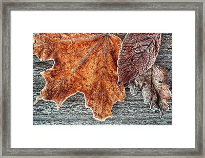 Jack Frost's Touch Framed Print