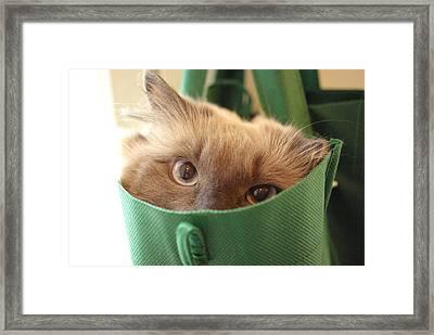 Jack In The Bag Framed Print