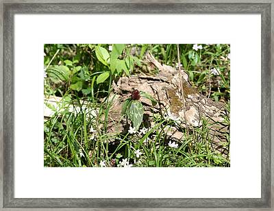 Jack In The Pulpit Stands Tall Framed Print by Eric Irion