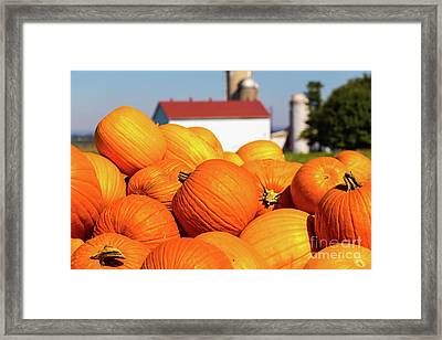 Jack-o-lantern Pumpkins At Farm Framed Print