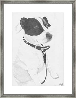 Jack Russell Cross Framed Print by David Smith