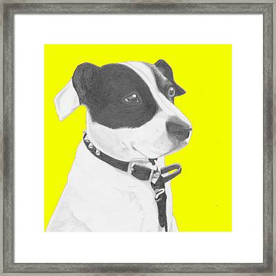 Jack Russell Crossbreed In Yellow Headshot Framed Print by David Smith