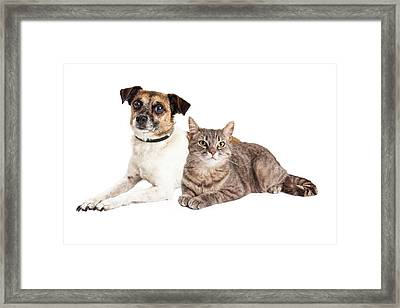 Jack Russell Terrier Dog And Tabby Cat Framed Print by Susan Schmitz
