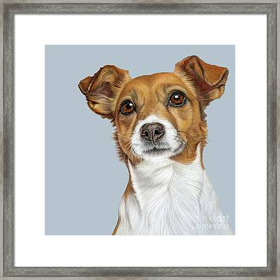 Framed Print featuring the drawing Jack Russell Terrier by Donna Mulley