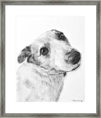 Jack Russell Terrier Drawing Framed Print by Kate Sumners