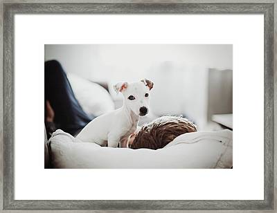 Jack Russell Terrier Puppy With His Owner Framed Print