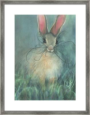 Jack-the-rabbit Framed Print by Anne Havard