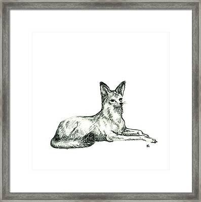 Jackal Sketch Framed Print by Shirley Heyn