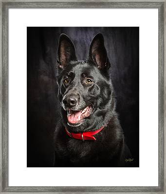 Jackaroe Framed Print by Everet Regal
