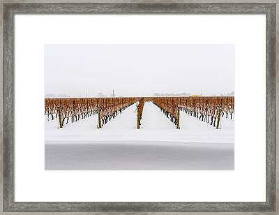 Jackson-triggs Winery Niagara Estates Framed Print