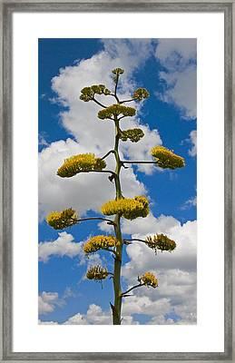 Jacobs Ladder Framed Print by Skip Hunt