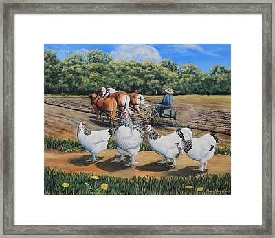 Jacobs Plowing And Light Bramah Chickens Framed Print