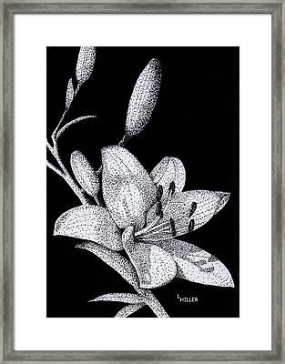 Jacqui's Lily Framed Print