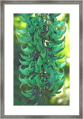 Jade Vine Framed Print by Denise Clark