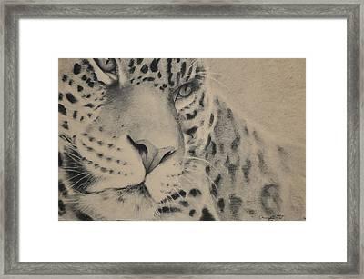 Jag Framed Print by Adrian Pickett Jr
