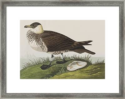 Jager Framed Print by John James Audubon