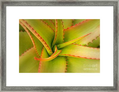 Jagged Aloe Framed Print