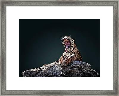 Jaguar 4 Framed Print