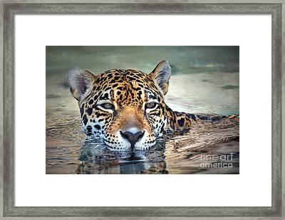 Jaguar Cooldown Framed Print by Dan Holm