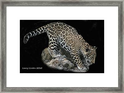Jaguar Cub Framed Print by Larry Linton