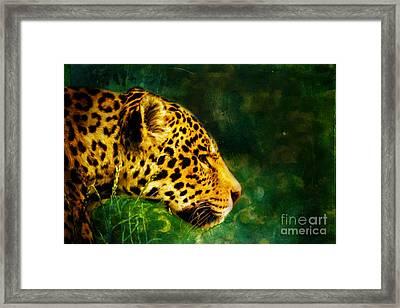 Jaguar In The Grass Framed Print