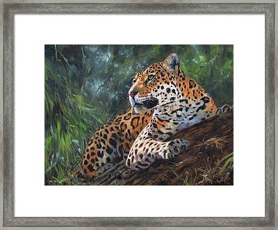 Jaguar In Tree Framed Print by David Stribbling