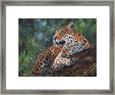 Jaguar In Tree Framed Print