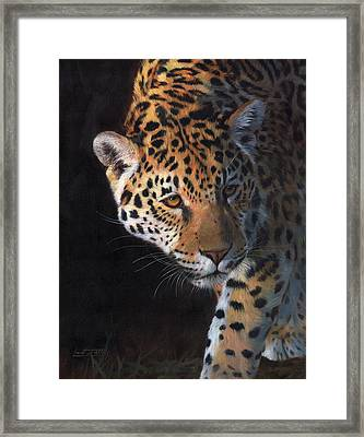 Jaguar Portrait Framed Print by David Stribbling