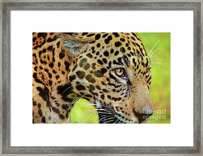 Jaguar Up Very Close Framed Print