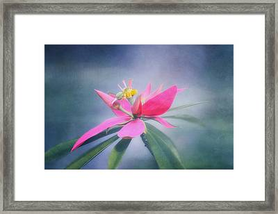 Jamacian Poinsettia Framed Print by Kim Hojnacki