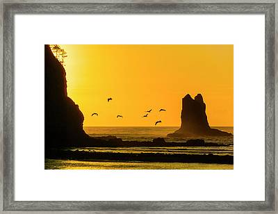 James Island And Pelicans Framed Print