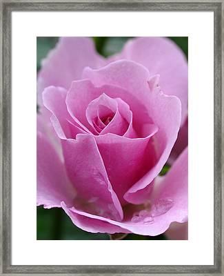 James Kelleher Rose Garden  Framed Print