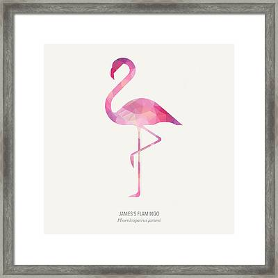 James's Flamingo Framed Print