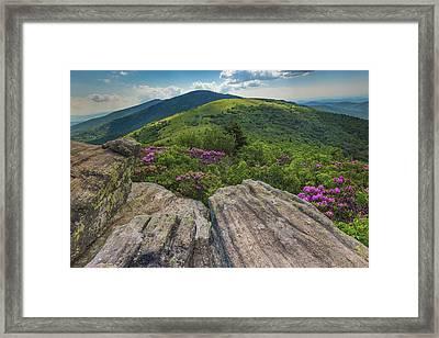 Jane Bald Rhododendrons Framed Print