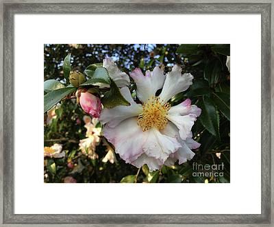 January Beauty Framed Print by Skip Willits