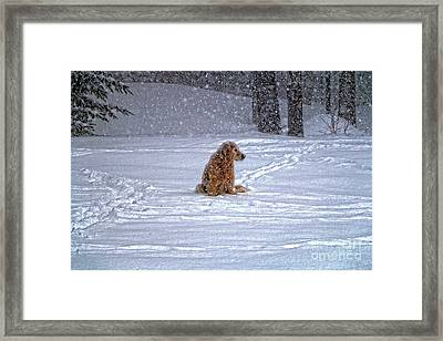 January Blizzard Framed Print