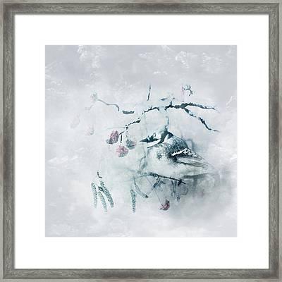 January Bluejay  Framed Print