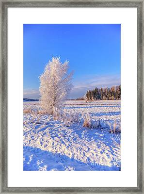 January Day Framed Print