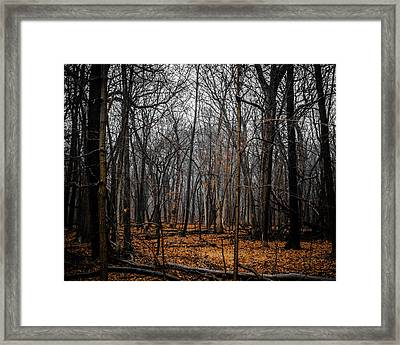 January Forest Rains Framed Print by Miguel Winterpacht