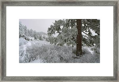 January On Kamiak Butte Framed Print by Jerry McCollum