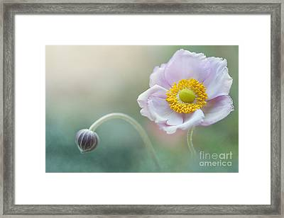 Japanese Anemone Framed Print