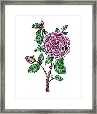 Japanese Camellia Flower Watercolor Framed Print