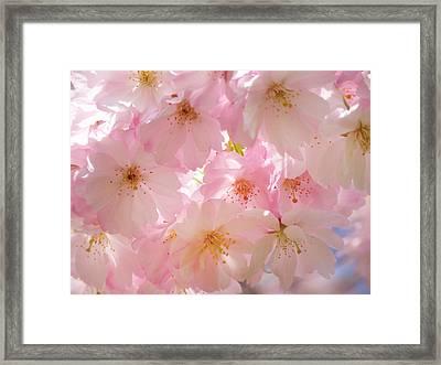 Japanese Cherry Blossom Beauty Framed Print by Georgiana Romanovna