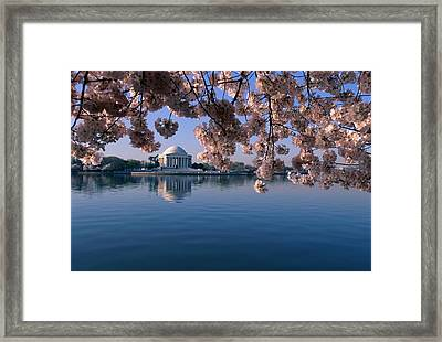 Japanese Cherry Blossoms Prunus Framed Print by Medford Taylor