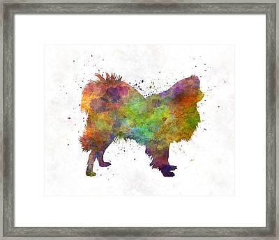 Japanese Chin 01 In Watercolor Framed Print by Pablo Romero