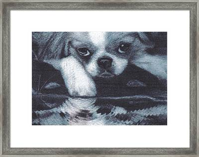 Japanese Chin Deep Thoughs Framed Print by Joshua Hullender