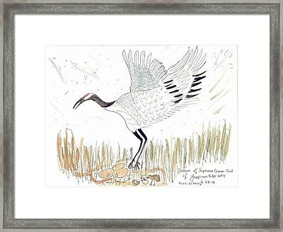 Japanese Crane And Her Nest Framed Print