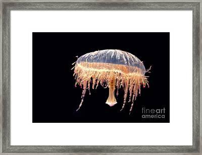 Japanese Flower Hat Jelly Framed Print by Jane Rix