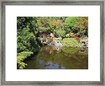 Japanese Garden At The Botanical Gardens In Hobart Tasmanis Framed Print by Bethwyn Mills